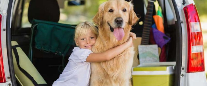 10 Best Cars For Traveling With Your Dog